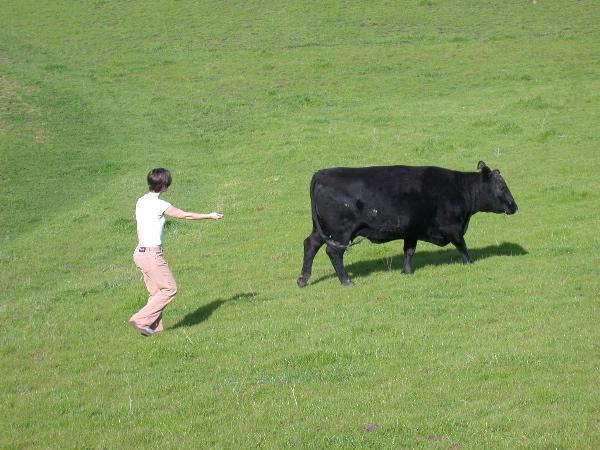 CowJenny2005